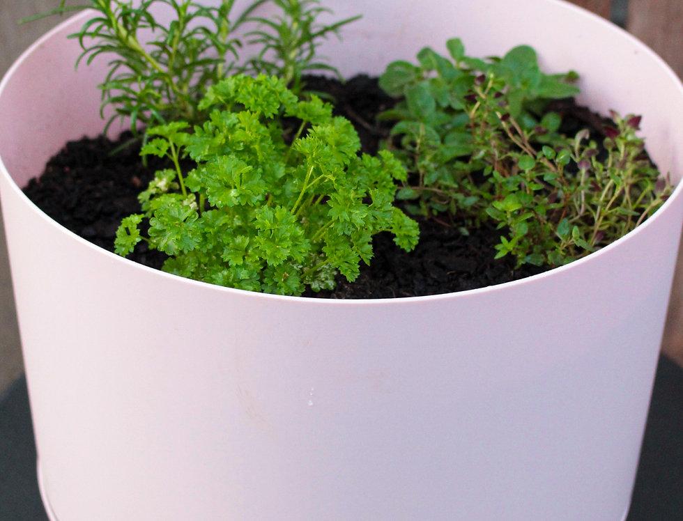 Large Herbs