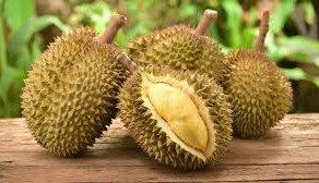 Comments on Durian Fruit