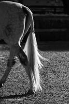 Hunter Tail