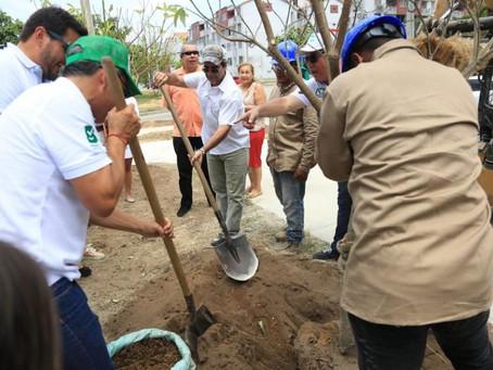 En Villa Carolina respiran el aroma de 800 árboles de alstonia nuevos