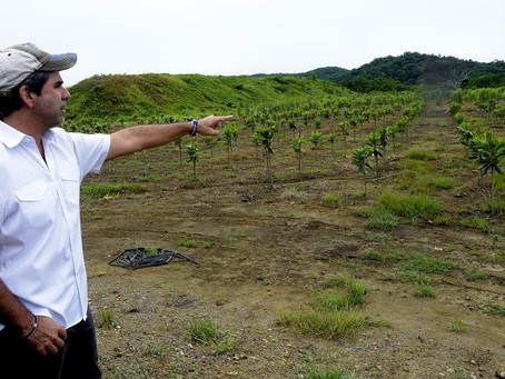 Comienza la siembra de más de 30.000 árboles en Barranquilla