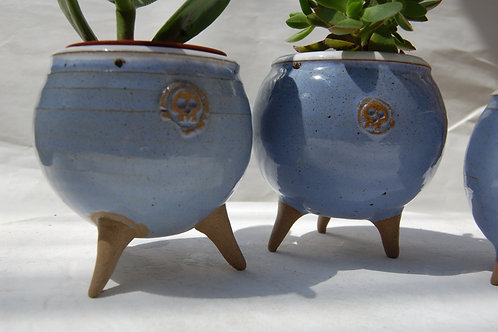 Cactus pods