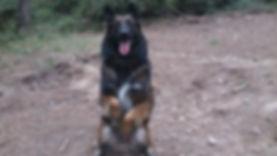 Education et comportement canin méthode positive et respectueuse éducateur canin comportementaliste canin hyères var éducation canine var