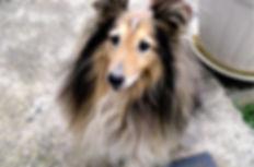 éducation et comportement canin méthode positive et respectueuse éducateur comportementaliste canin var hyères éducation canine var