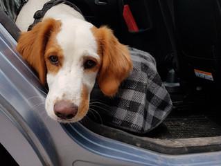 3 conseils pour apprendre le calme à son chien