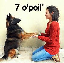 Education et comportement canin méthode positive éducateur canin comportementaliste canin Hyeres var éducation canine var