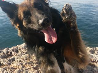 Les « tricks » sont bénéfiques pour votre chien