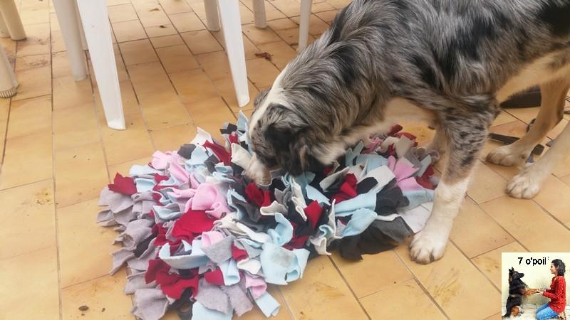 Le snufflemat tapis de fouille pour chien 7 o 39 poil educateur canin comportementaliste var - Tapis de fouille ...