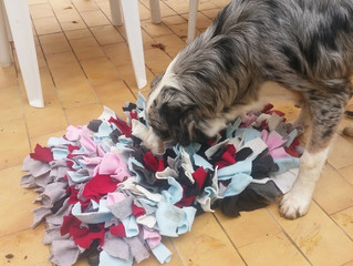 Le snufflemat : tapis de fouille pour chien