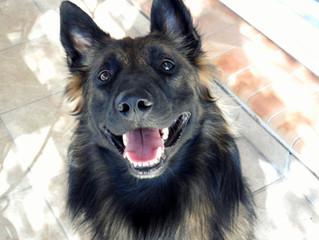 7 o'poil News : la Newsletter qui a du chien !