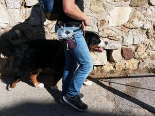 5 conseils pour un équipement canin optimal