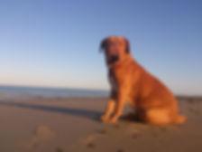 Education et comportement canin méthode positive et respectueuse éducateur comportementaliste canin hyères var éducation canine var