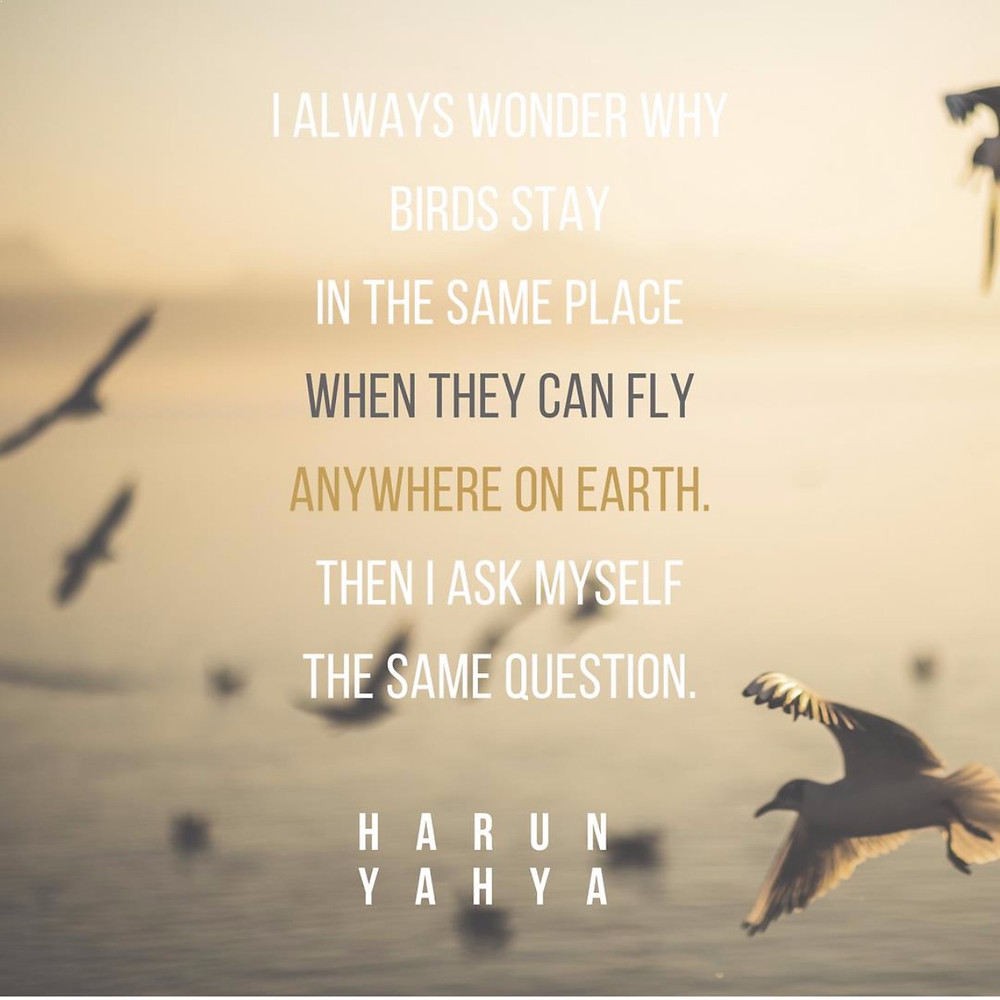 Travel quote: I always wonder why birds stay in the same place when they can fly anywhere on earth. Then I ask myself the same question. | Harun Yahya