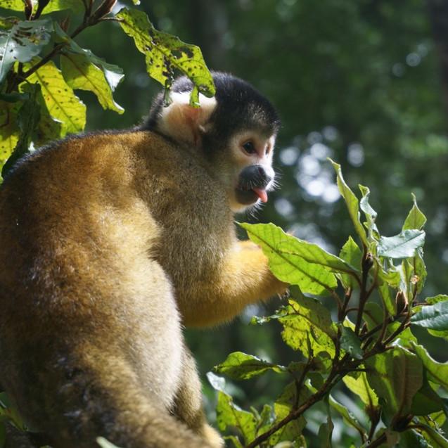 Monkey at Monkeyland