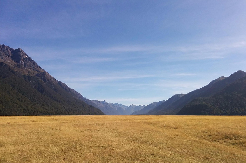 Cascading mountains behind yellow field in Fjordland New Zealand