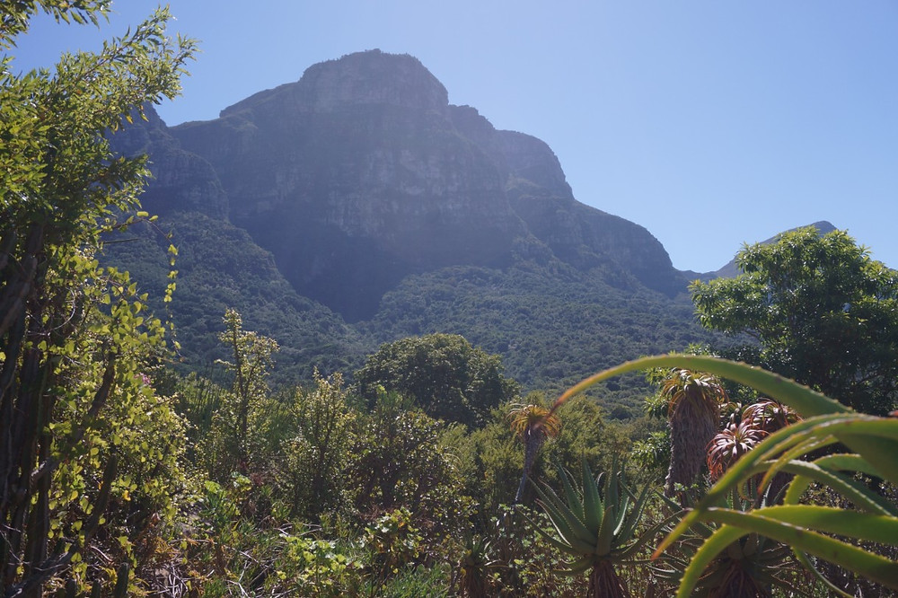 Kirstenbosch Botanical Garden view of Skeleton Gorge, Cape Town