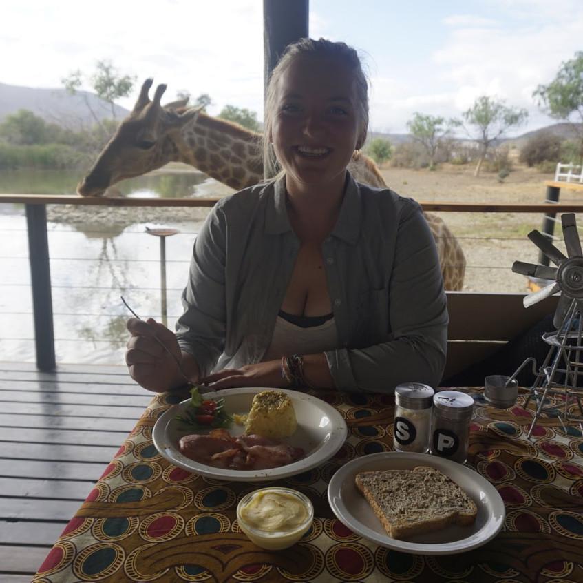 Breakfast with Giraffes at Oudtshoorn