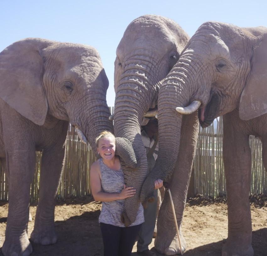 Elephants hugging Missy