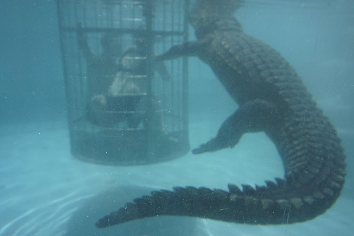 Crocodile cage dive at Cango