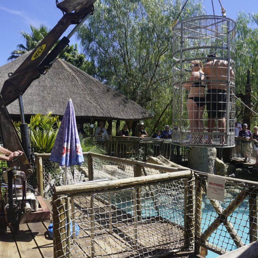 Cage diving with crocodiles at Cango Wildlife Reserve