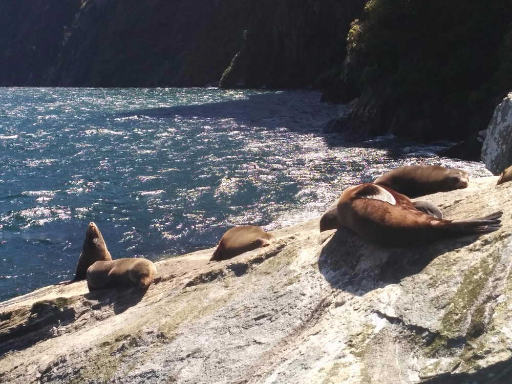 Seals lounging on the rocks