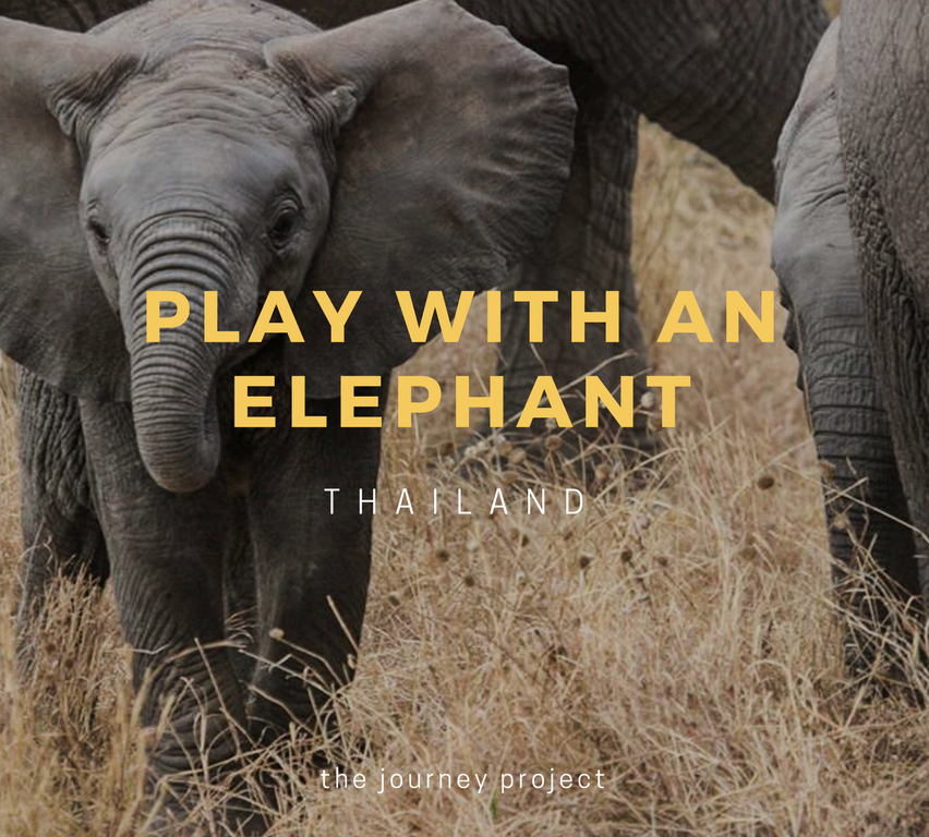 Play With An Elephant