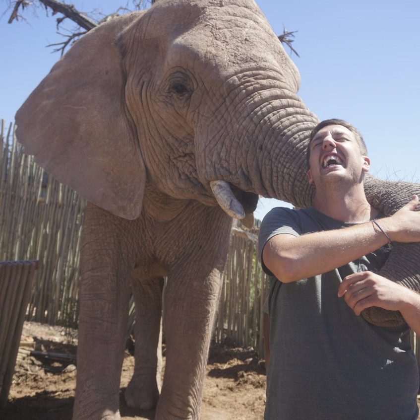 Feeding elephants at Buffelsdrift