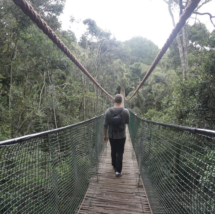 Bridge at Monkeyland, Plettenberg Bay