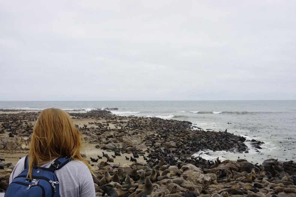 Missy in front of seals at Cape Cross Seal Colony