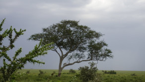 THE AFRICA DIARIES: TANZANIA PHOTO DIARY