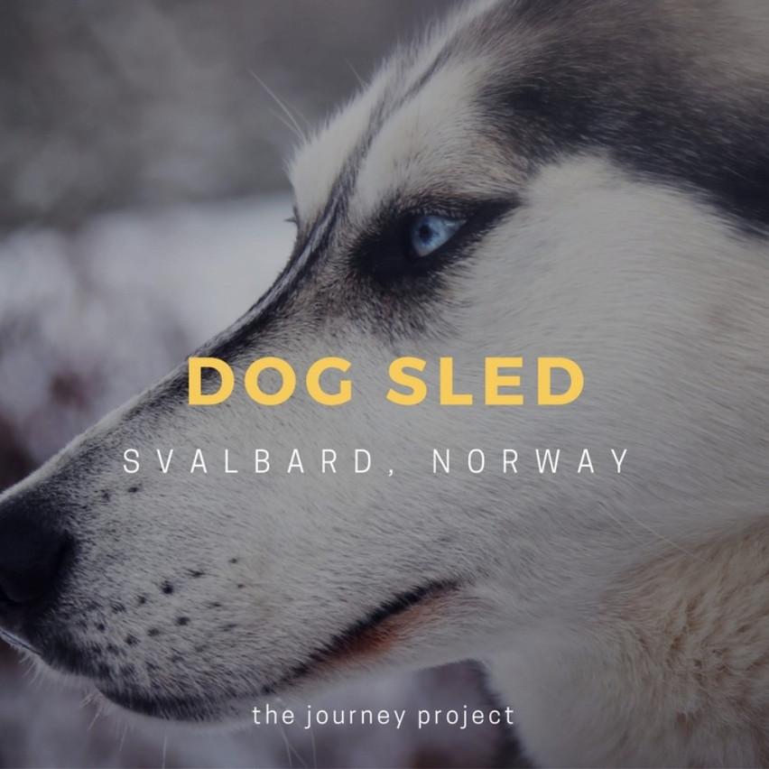 Dog Sled the North