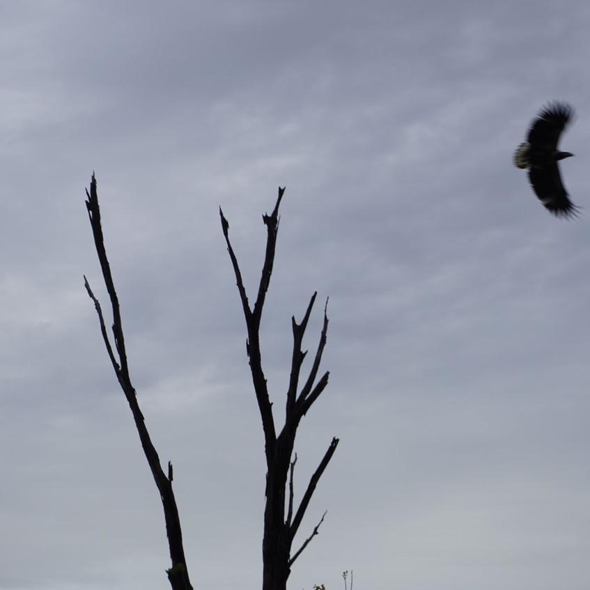 Bird in Chobe National Park, Botswana