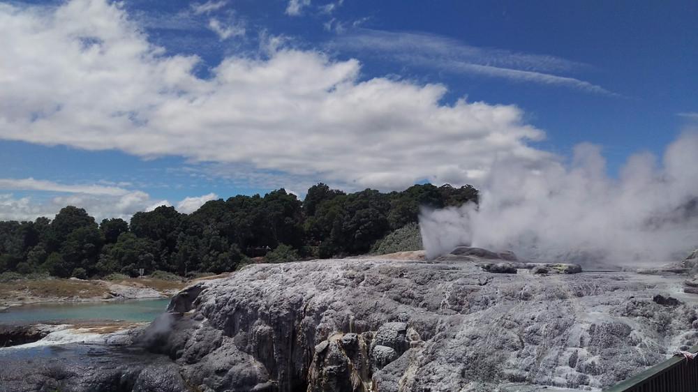 Te Puia geyser
