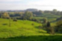 heuvelland_edited.jpg