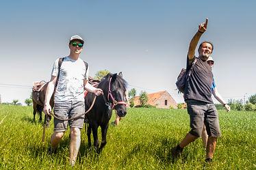 3-daagse staptocht met paard/pony Heuvelland