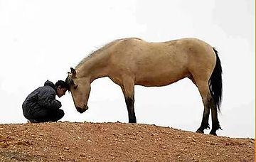 begeleiding, coaching en therapie met paarden