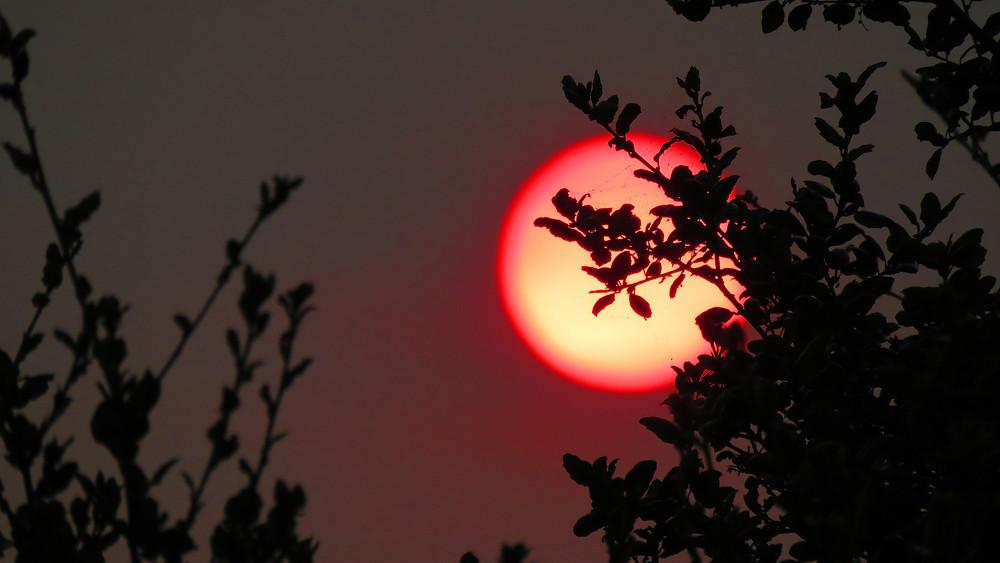 Red Sun by Carolyn Yarnell