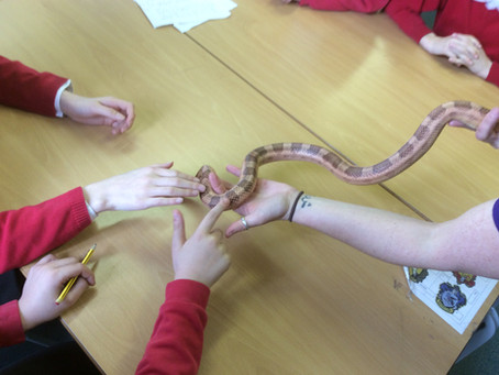 Photos Received From Earby Springfield School