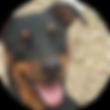 Adopt a Doberman