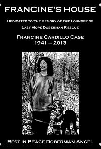 Dobermans Texas   Last Hope Doberman Rescue