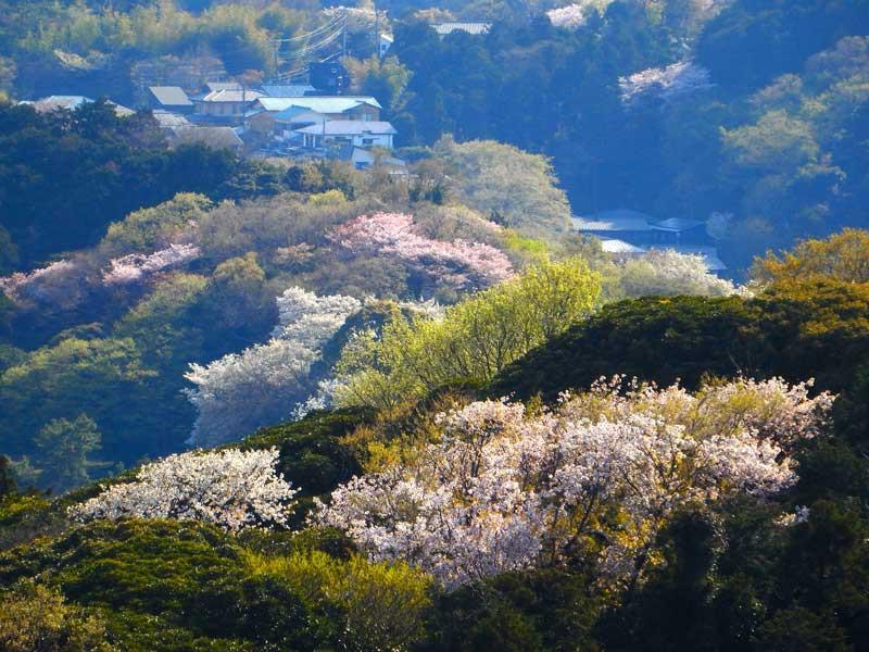 六国見山の春の風景
