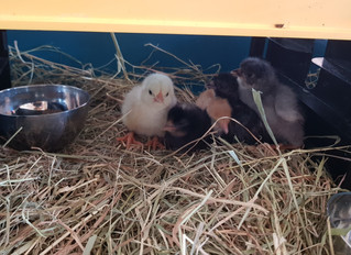 New Arrivals in Reception!