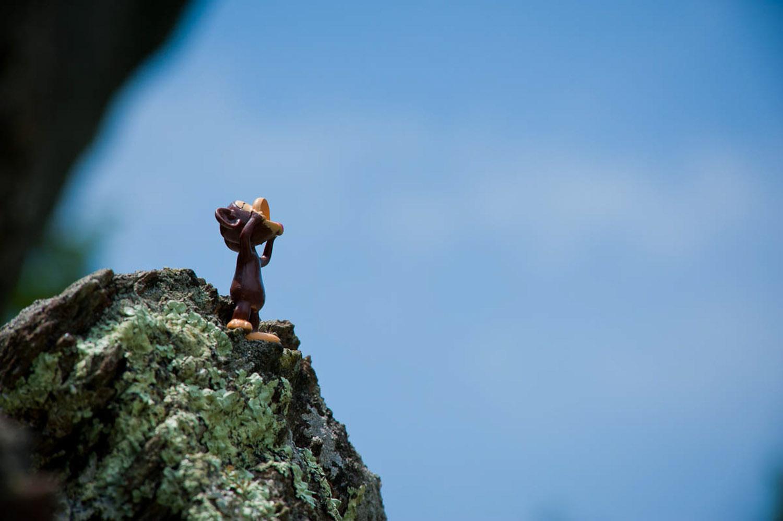 monkeymadness-6