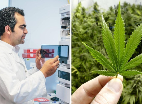 AUT partners with Zeacann to present Medicinal Cannabis Science paper