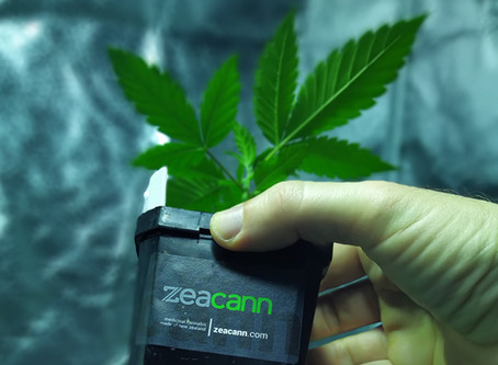 Zeacann secures first cultivation licence issued under New Zealand's Medicinal Cannabis Scheme