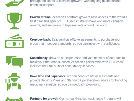 Grow the best medicinal cannabis with Zeacann