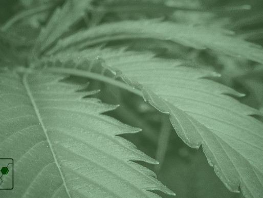 Newsroom: Our cannabis industry's hopes and fears
