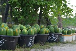 thoddoo papaya.jpg