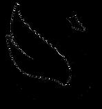 DessinCygne3noirv2.png