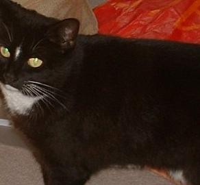 THE ADVANTAGES OF HAVING AN AUTISTIC CAT
